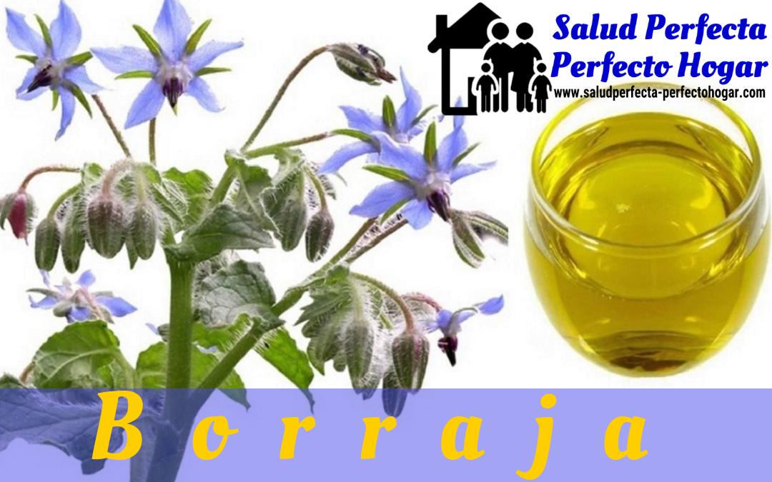 Remedios naturales para la depresión_ Borraja - Salud Perfecta - Perfecto Hogar
