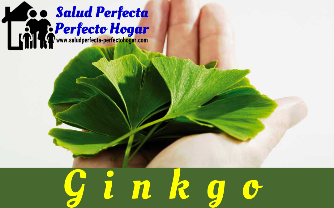 Remedios Naturales Para La Depresión. Ginkgo - Salud Perfecta - Perfecto Hogar