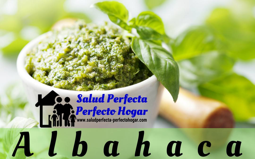 Remedios naturales para la depresión_ Albahaca - Salud Perfecta - Perfecto Hogar